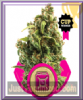 Royal Queen Sour Diesel Fem 10 Cannabis Seeds